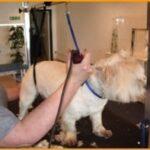 dog groomer newport